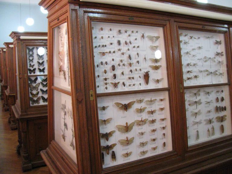 Prilog reviziji Rebelovog popisa leptira (Lepidoptera) Bosne i Hercegovine